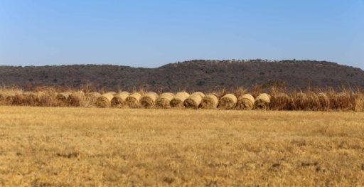 haystack_9556