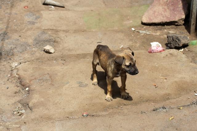 puppy by ntombi_0437
